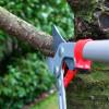 Как правильно обрезать деревья: методы, принципы, рекомендации