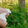Причины высокой продуктивности сорняков