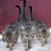 Заводим кота в доме. Что нужно знать о кошках?
