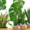 Растения для офиса — зелёная отделка
