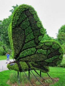 boxwood-shape-cut-garden-figurines-butterfly