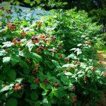 plodovie derevia1