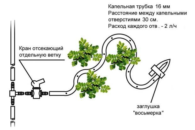 poliv-16