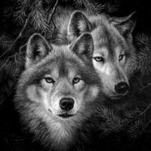 Схема вышивки крестом: «волки и пара волков» скачать бесплатно в фото