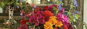 Композиции из садовых цветов и суккулентов в фото