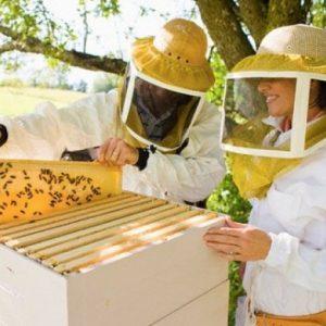 Все для пасеки — необходимый инвентарь для пчеловода