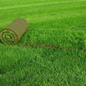 Рулонный газон. Ухоженный участок – это реально!