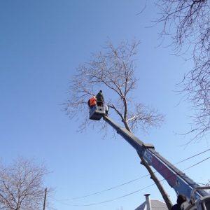 Спил деревьев с вышки