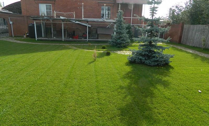 газон в рулонах