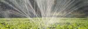 Спрей-лента «Туман» – дешевый и эффективный способ полива